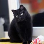 Молодая чёрная кошечка Кэтти, Новосибирск