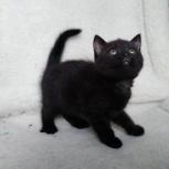 Маленькие норочки котята, Новосибирск