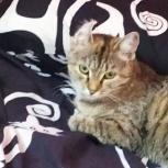 Хочу домой к заботливому хозяину (котенок), Новосибирск
