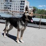 Пёс Жук - верный друг и охранник!, Новосибирск