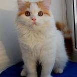 Котик Светлячок, Новосибирск