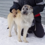 Собака, Новосибирск