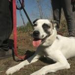 Собака Эмма ищет самого ответственного и любящего хозяина., Новосибирск