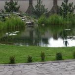 Строим пруды любой конфигурации и размеров от 5 ти дней., Новосибирск