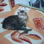 В Краснообске потерялся коричневый кот с рыжими и белыми пятнами, Новосибирск