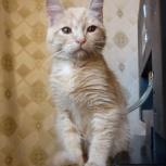 Мальчик, около 3 месяцев., Новосибирск