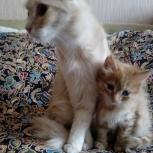 Отдам котенка в хорошие руки, Новосибирск