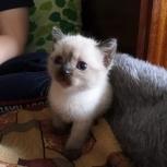 Отдам в добрые руки котёнка, Новосибирск