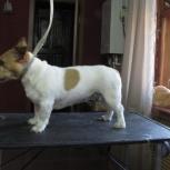 Тримминг и стрижки собак, домашние, выставочные, Новосибирск