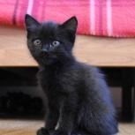 «Пантера» – черная кошечка, Новосибирск