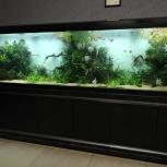обслуживание аквариума, Новосибирск