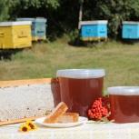 Мед  с личной пасеки, Новосибирск