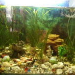 Продам аквариум на 160 литров, Новосибирск