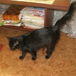 Кошечка Чернышка в поисках дома, Новосибирск
