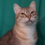 Очень интеллигентный кот Ричи, Новосибирск