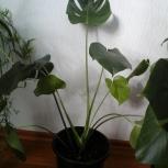 Горшечные растения родники, Новосибирск