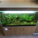 продам аквариум 225 литров, Новосибирск