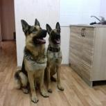 Квартирная передержка собак, Новосибирск