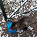 Котик в добрые руки, Новосибирск