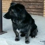 Потерялся пес, Новосибирск