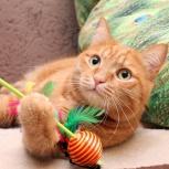 Красавчик Рыжик-кот с золотым характером!, Новосибирск