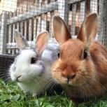 Продам живых кроликов, Новосибирск