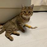 Отдам ласкового чистенького кота в добрые руки, Новосибирск