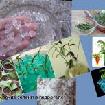 Гидрогель для  выращивания рассады, семян, посева., Новосибирск