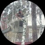 Спил, обрезка, снос деревьев. Звоните работаем без выходных., Новосибирск