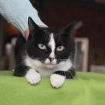 Грациозная кошка в лучшую семью, Новосибирск