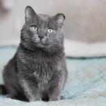 щекастый кот Мишка, Новосибирск