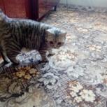 Пропал любимый кот ребёнка, Новосибирск