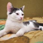 Котята Луи и Муха ищет хозяев, Новосибирск