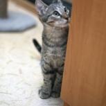 Полосатый котёнок Джонни, 5 мес, Новосибирск