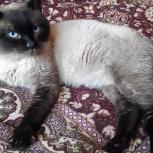 Найден сиамский кот, Новосибирск