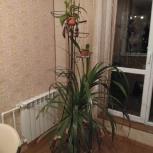 Напольная подставка для цветов, Новосибирск