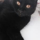 Найдена молодая кошка / Отдам, Новосибирск