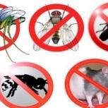 Профессиональное уничтожение всех видов насекомых (клопов,блох и т.д.), Новосибирск