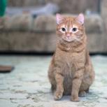 Молодой рыжий котик, Новосибирск