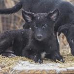 Щенки-кобельки ищут дом, Новосибирск