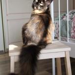 Сказочный домовенок котенок Чуча, Новосибирск