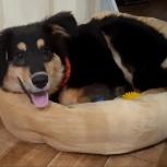 Пёс Тэдди., Новосибирск