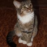 Отдам бесплатно котенка турецкой ангоры., Новосибирск
