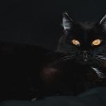 кошка Муся, Новосибирск