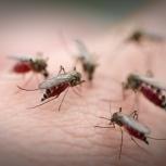 Уничтожение комара Обработка от комара, Новосибирск