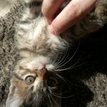 Отдам воспитанных котят в добрые заботливые семьи, Новосибирск