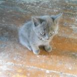 Продам-отдам котят, Новосибирск