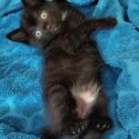 Отдам бесплатно котёнка в добрые руки котенка., Новосибирск