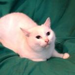 Принцесса Снежка 2 года, отдам кошку, Новосибирск