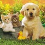 Передержка (зоогостиница) для кошек и собак, Новосибирск